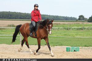 Panino, das Nachwuchspferd wird auf die Langstrecke vorbereitet, Foto: Victoria Oldenburg