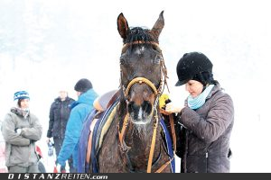 Carolin Lautner mit Khamaal im Vet-Gate, Foto: Sanine Schirmer