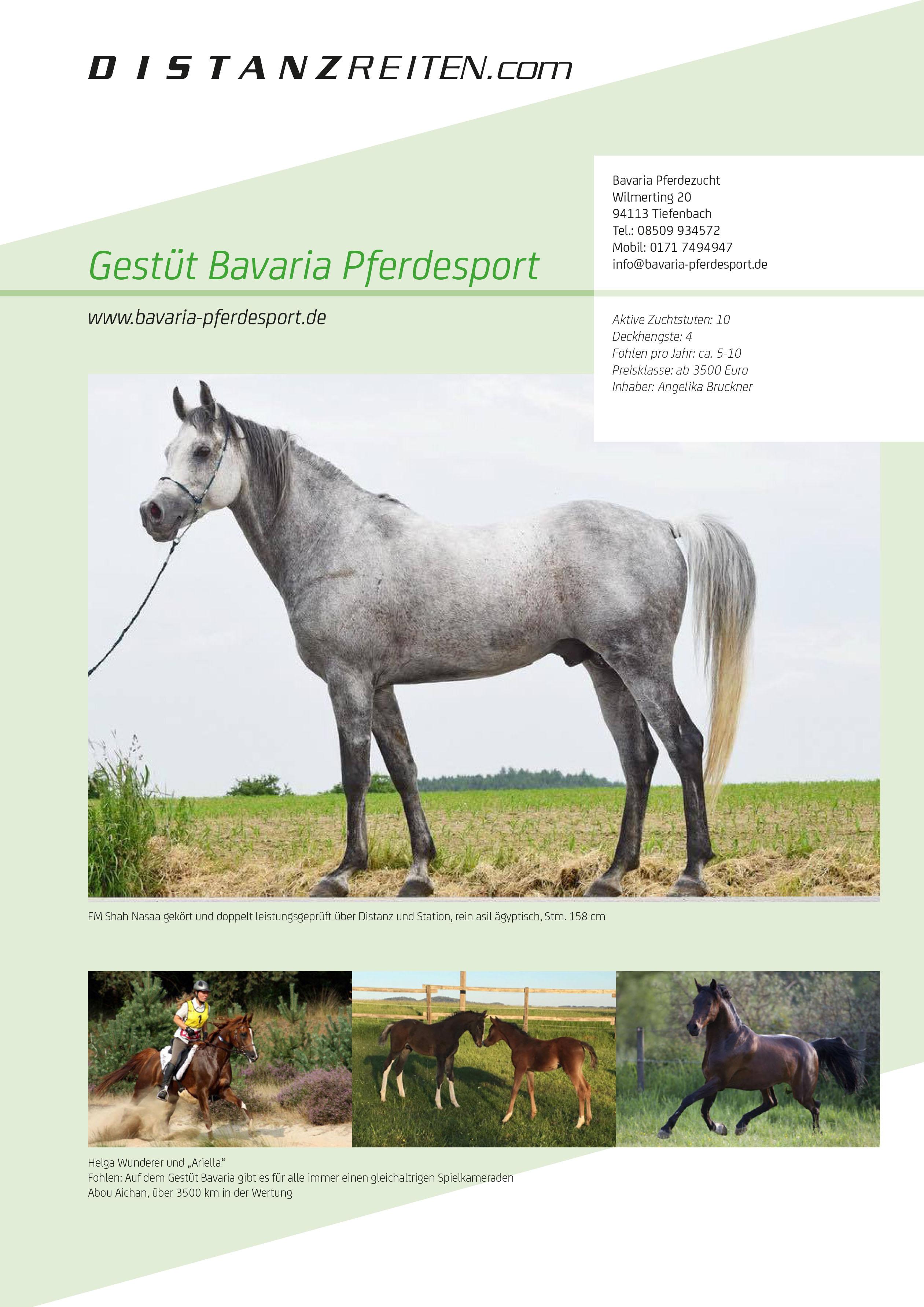 Bavaria Pferdesport Flyer, Grafik: Samantha Fröhlich