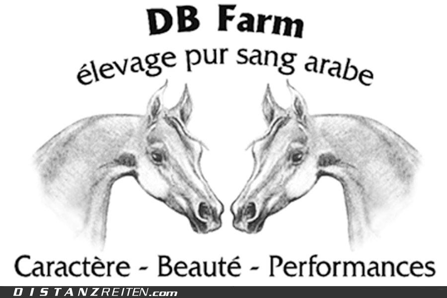 "Vollblutaraberzucht ""DB Farm"""