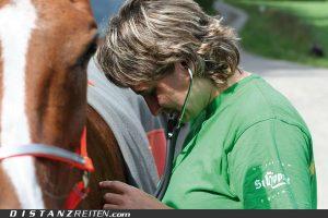 Während des Rittes kontrolliert der Tierarzt...