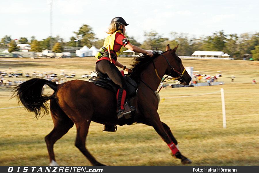 Der Reiter: Er muss genauso fit und sportlich sein, wie sein Pferd. Foto: Helga Hörmann
