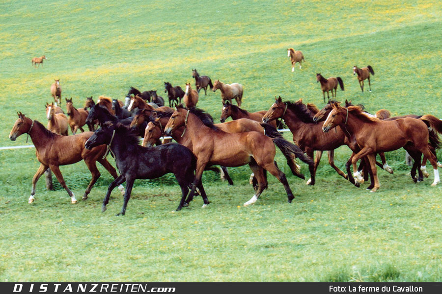La Ferme du Cavallon, Foto: La Ferme du Cavallon
