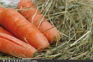 Vor dem Weidegang ausreichend Heu füttern und dabei auf gute Heuqualität achten!